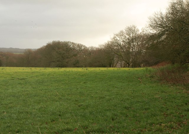 Meadow by the Tarka Trail
