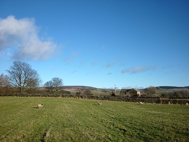 Sheep pasture by Tofts Road