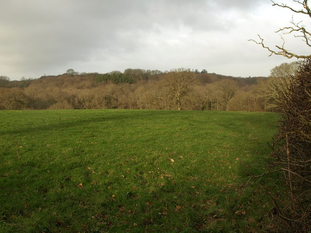 Meadow near Hayes Barton