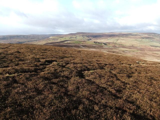 On Reeth Low Moor