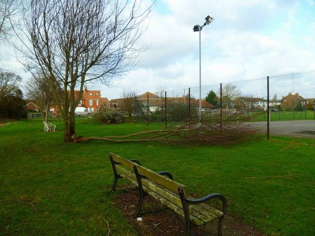 Seats and broken tree at Hunston