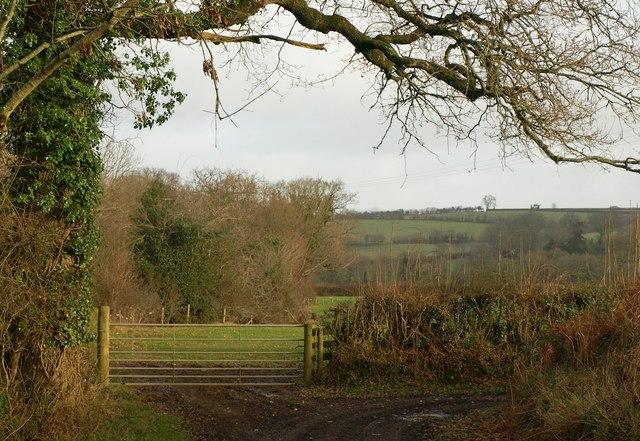 Field access track near Hayes Barton