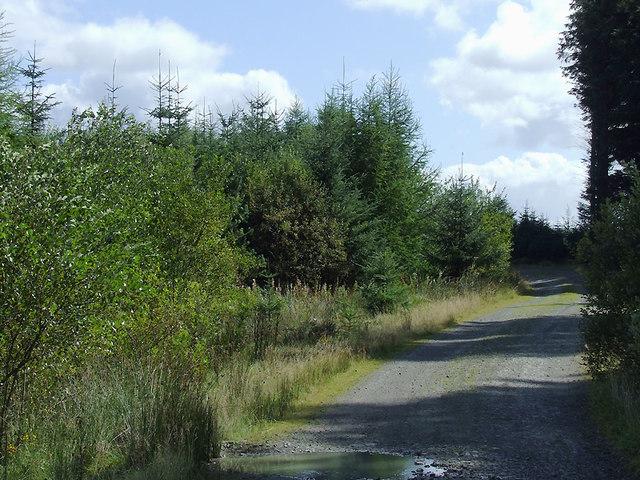 Forestry road north of Soar-y-Mynydd, Ceredigion