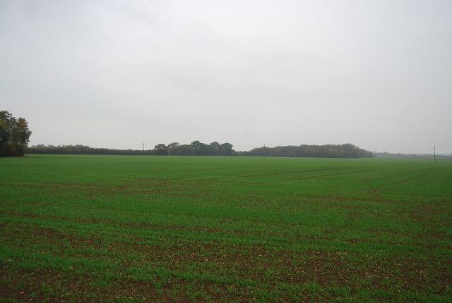 Wheat by Molehill Rd