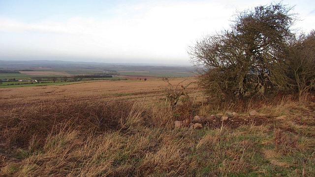 Woodland corner, Horse Rigg
