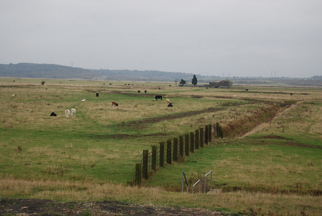 Fence and ditch, Cliffe Marshes