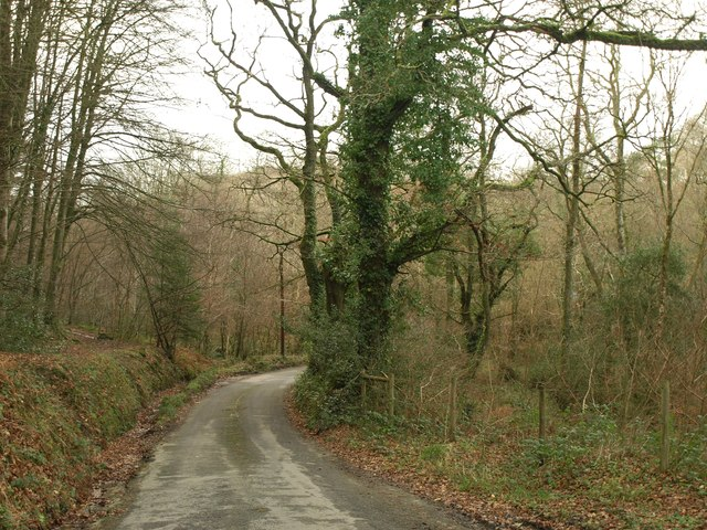 Lane past Goldburnhill Covert