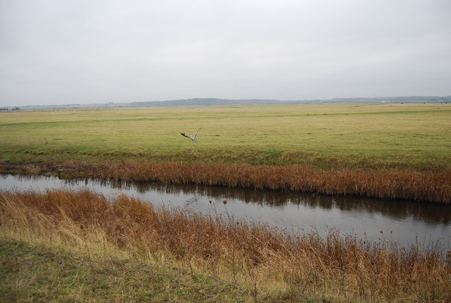 Heron, drainage ditch and Cliffe Marshes