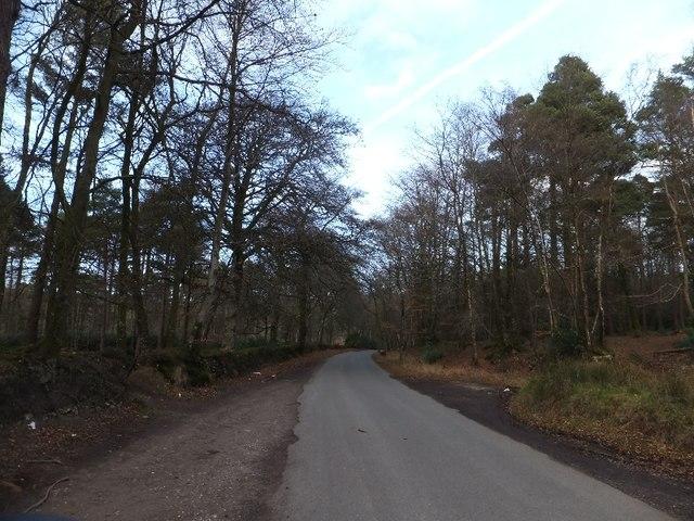 Minor road leading through Marsh Plantation