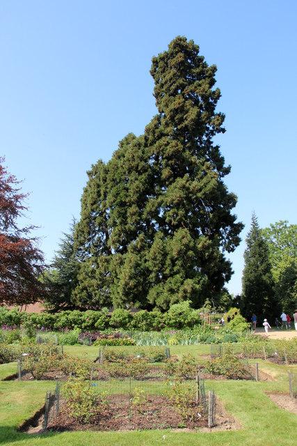 Garden, Knebworth House, Hertfordshire