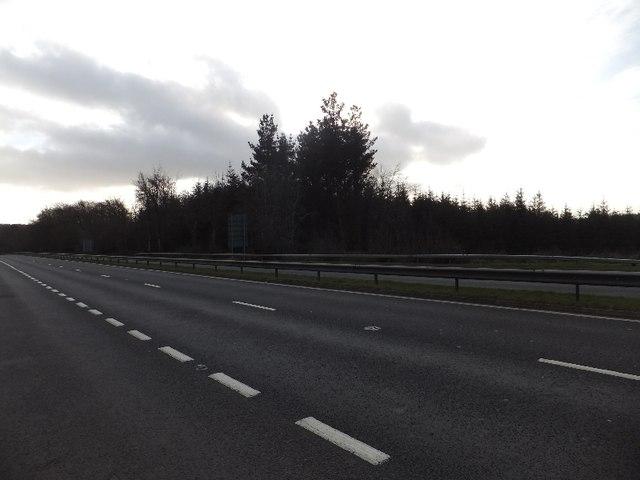 Looking across A380 towards woodlands