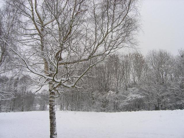 Winter Scene - Hickmerelands December 2010