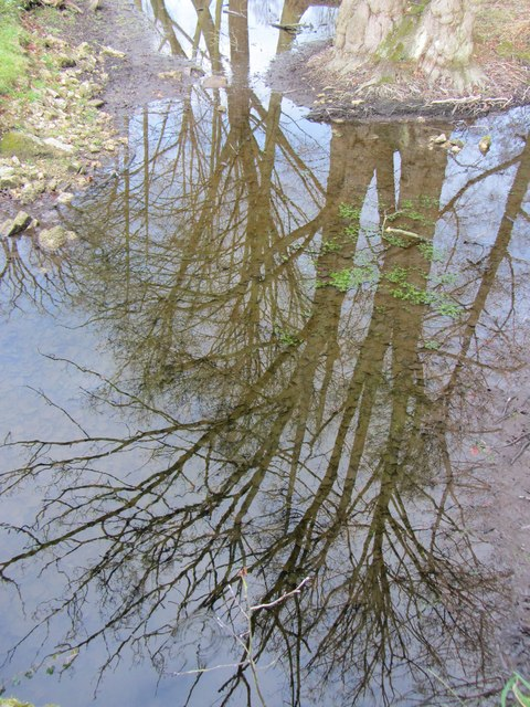 Tree reflections in New River, Landwade