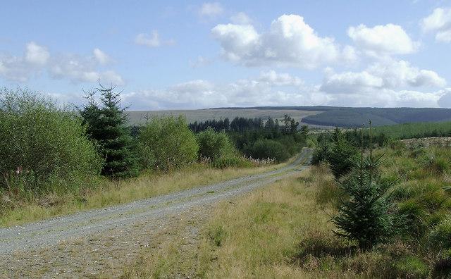 Forestry road south-east of Pen-y-Gurnos, Ceredigion