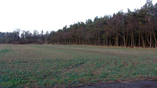 Arable field beside the Tweed