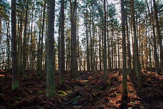 Lower Saline Wood