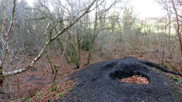 Bing, Black Wood