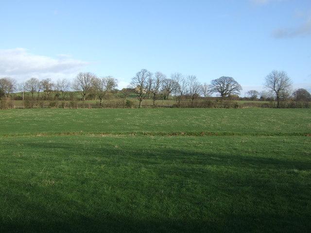 Farmland off Pye Lane