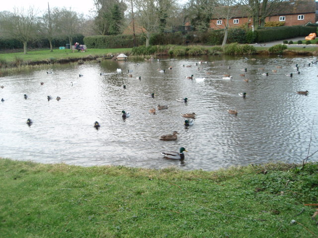 Activity on the duck pond