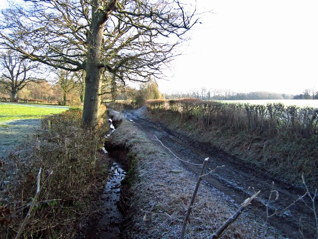 Frosty Track