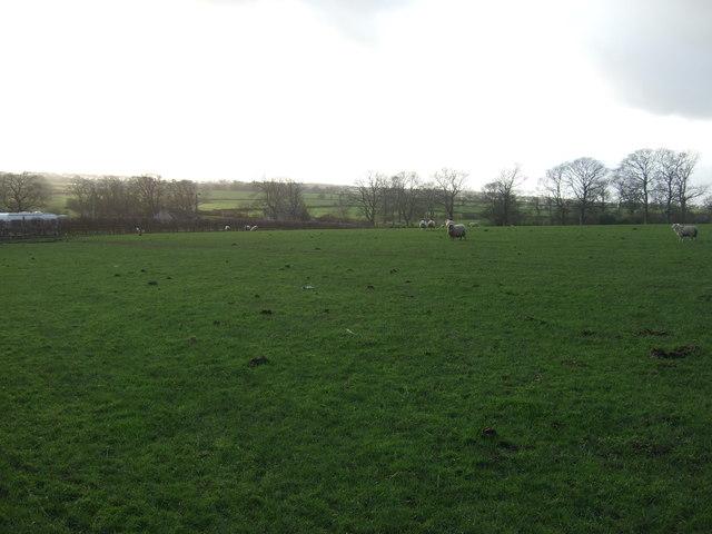 Grazing land, Dike Bottom Farm