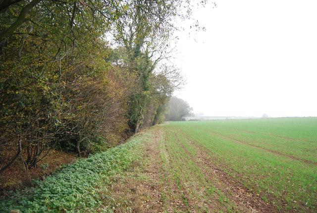 Footpath along Calfs Wood