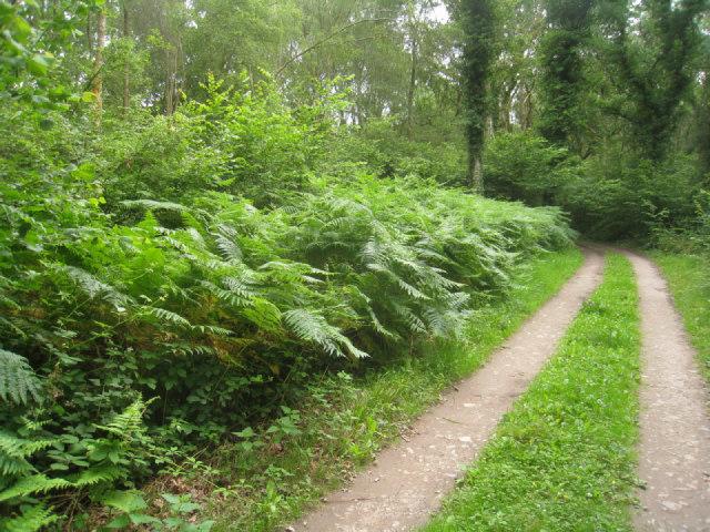 Track into Black Wood