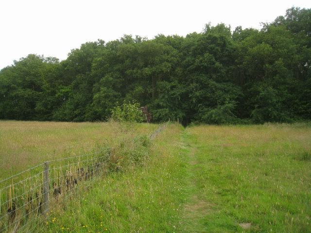 Path into Black Wood