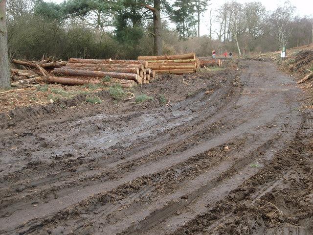 Logging activity on Rammamere Heath