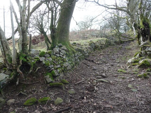 Path above the Afon Mellte