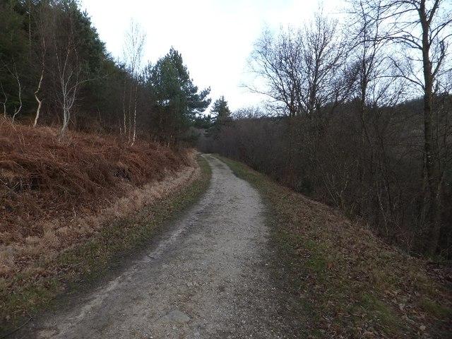 Track through bracken and woodland on Haldon