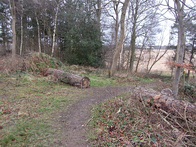 Fallen timber, Winton Estate