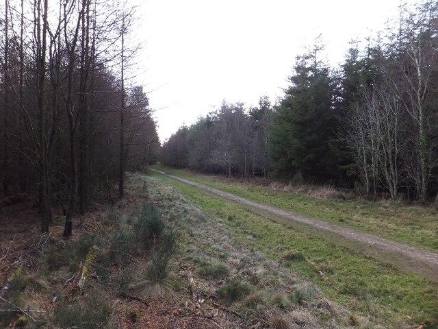 Path into Zigzag Wood