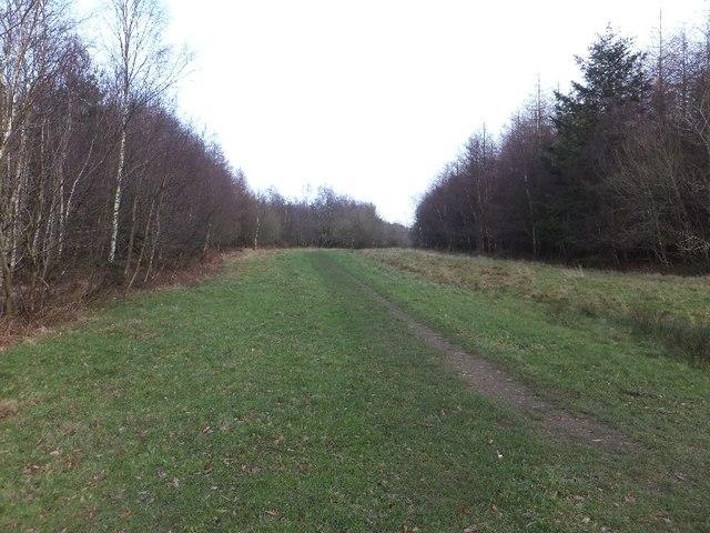Bridleway through Big Wood, leading to Holloway Lane