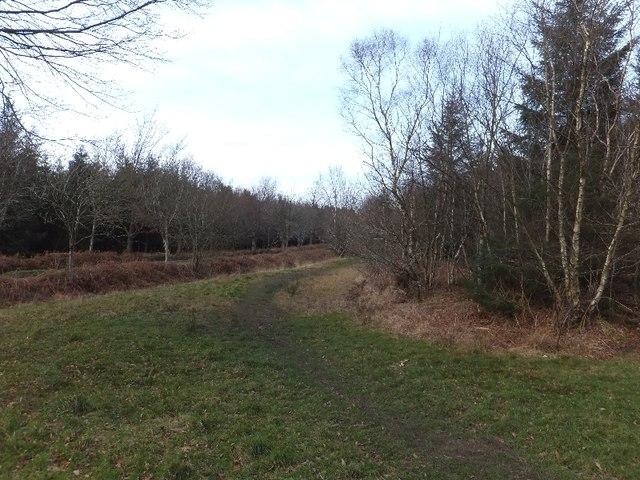 Path and road through Harcombe Plantation