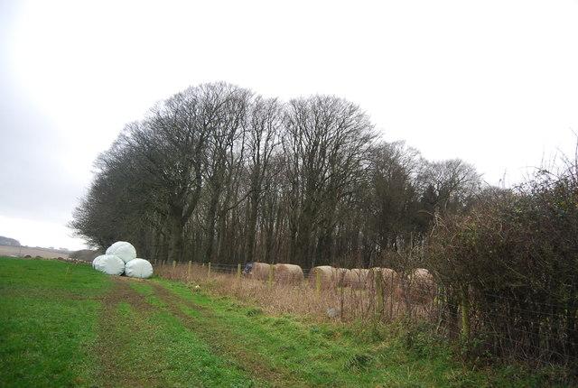 Big Wood and bales