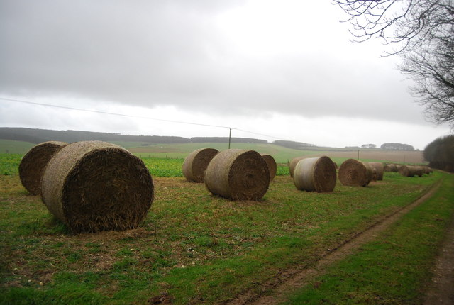 Bales along the path