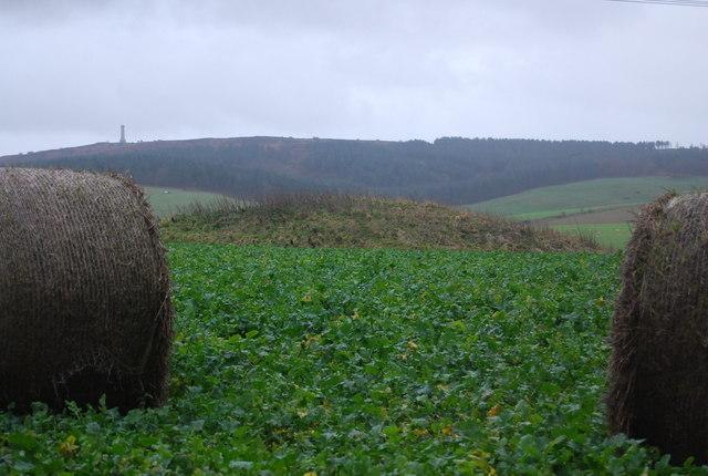 Tumulus in a turnip field