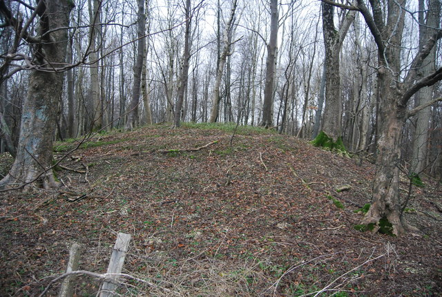 Tumulus in the trees