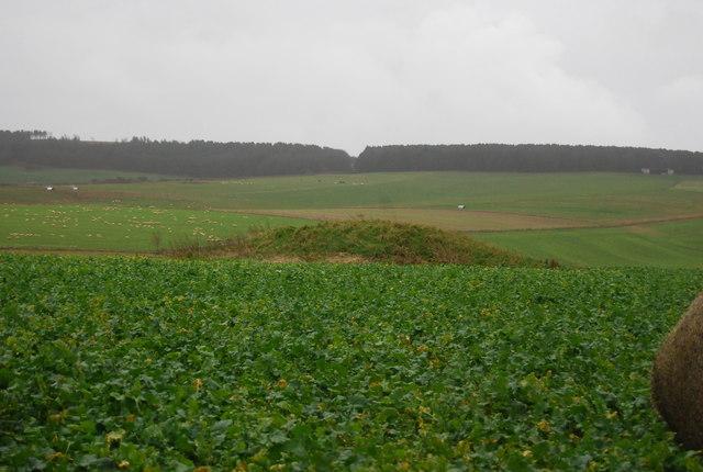 Tumulus and turnips