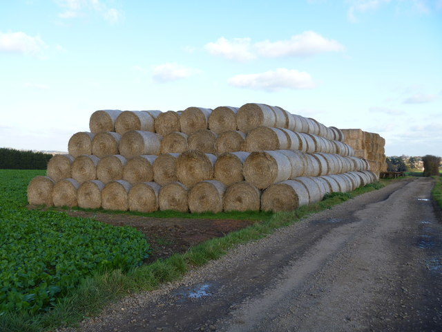 Lots of straw