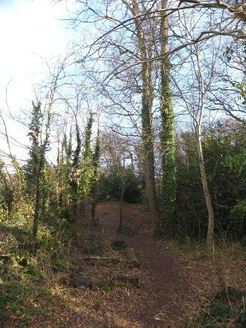 Community wood by Elm Grove Road