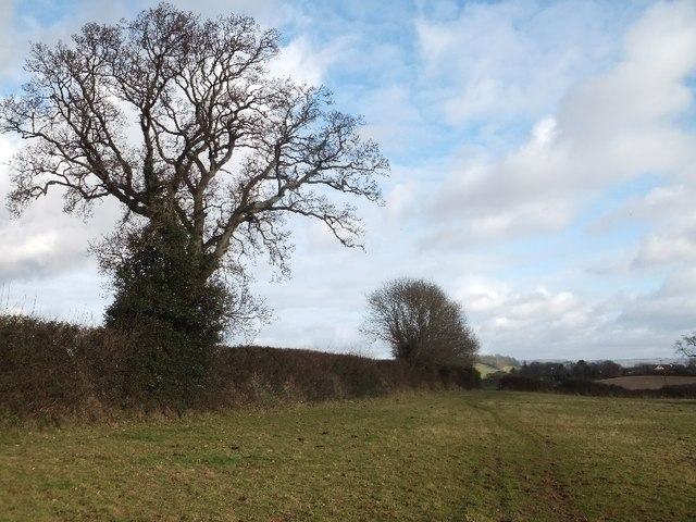 Hedges and bare winter trees