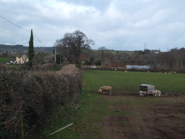 Field at the junction of Hensford Road and Branscombe Lane