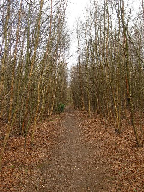 Footpath, Bolt Wood