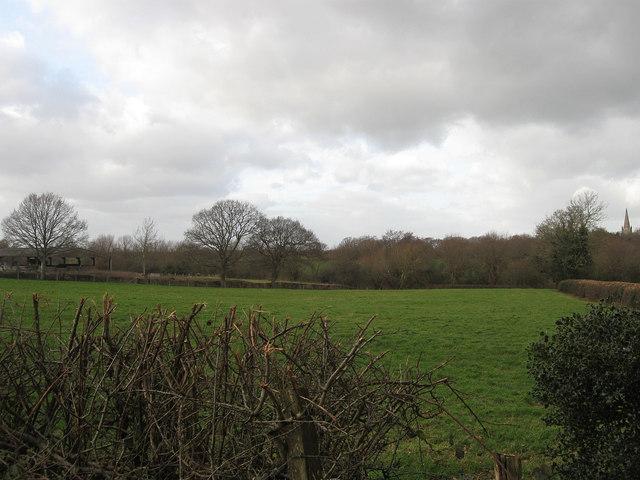 Brake Field