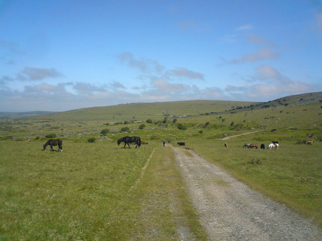 Path with ponys