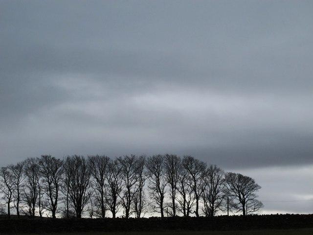 Plantation above East Allendale