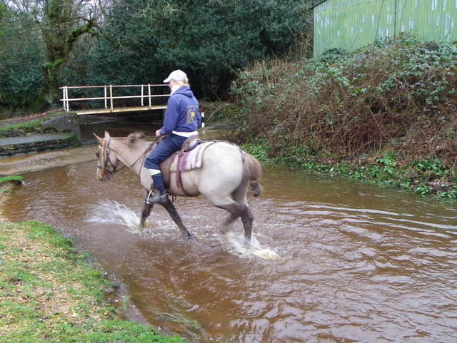 New Forest pony at work, Blissford