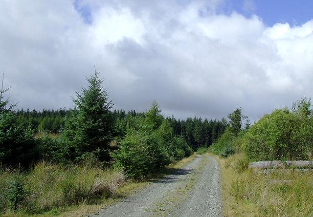 Forestry road in the Dalarwen Plantation near Pen y Gurnos, Ceredigion